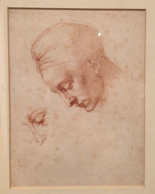 Michelangelo Drawing Model Head