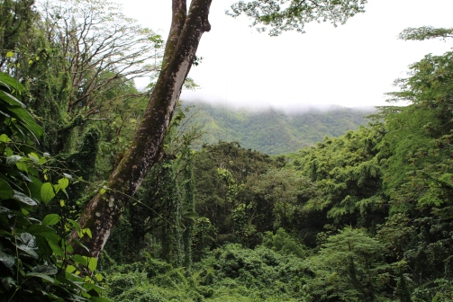Manoa Falls Trail--Oahu, Hawaii