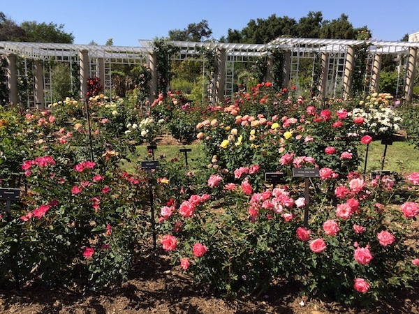 Rose Gardens Huntington